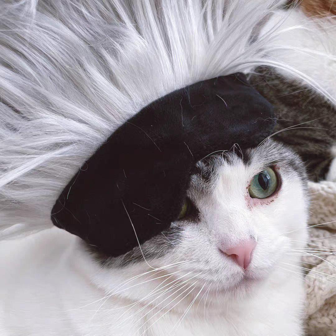 小猫咪本色cos五条悟