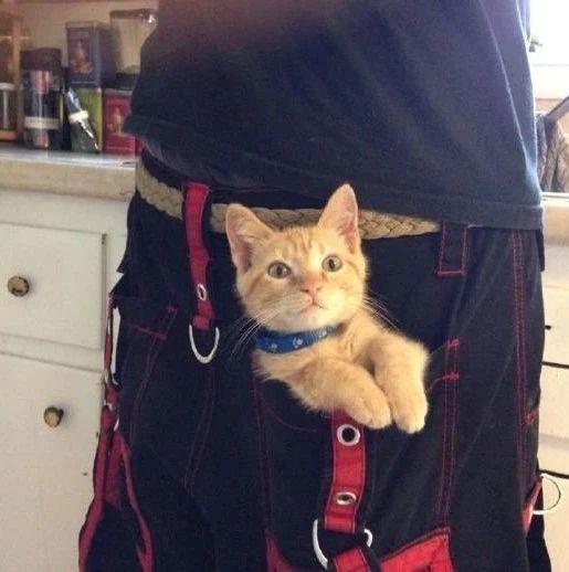 啊口袋妖怪好可爱,就决定是你啦!小猫咪!