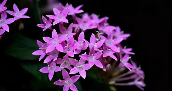唯美的繁星花