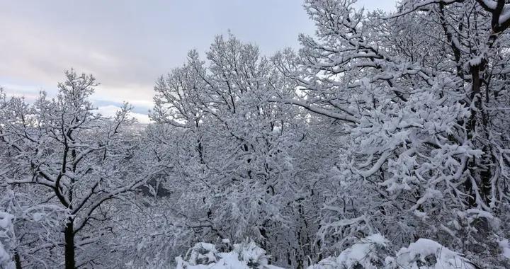 """意大利:居民自带""""装备""""森林间玩雪欢乐无穷"""