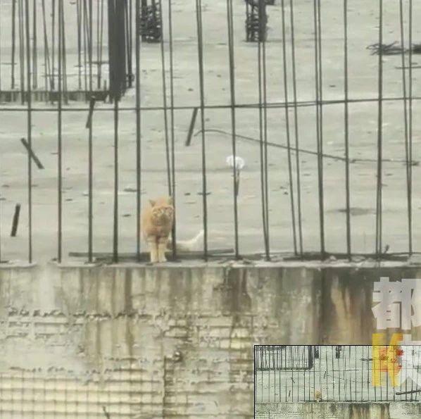 """西安一只猫被困楼顶11天,女""""铲屎官""""把记者哭懵了……"""