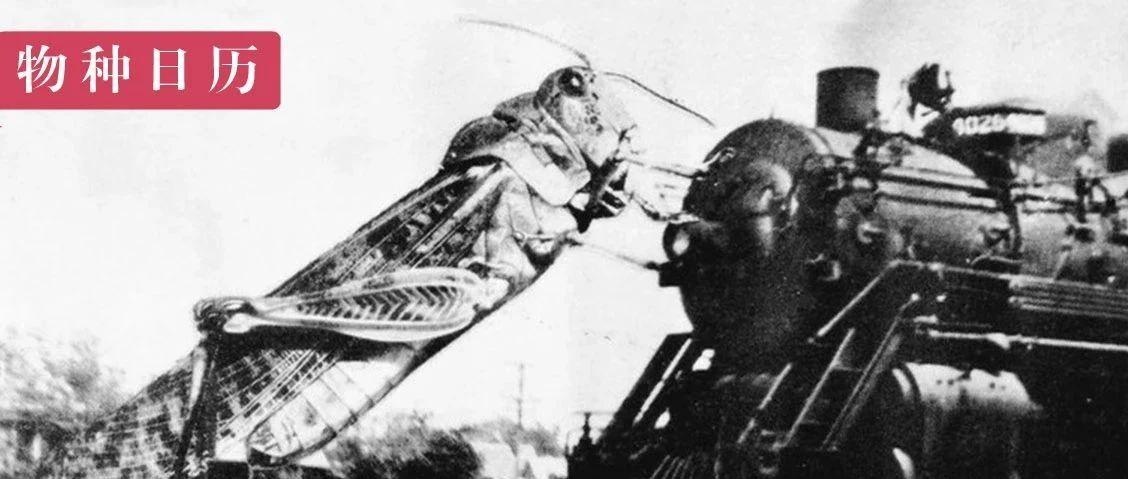 面积比四川省还大的蝗虫群,怎么消失了?