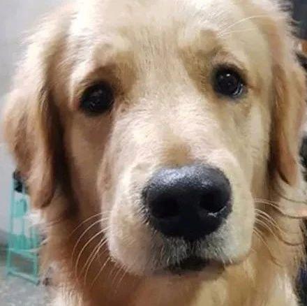 网友在门上开了一个小洞,狗子就自己化身智能门锁,笑喷!