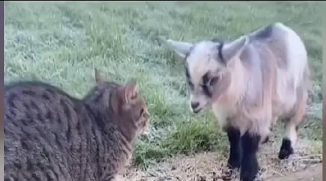 猫:你指定是有毛病!也不知道是哪个病院逃出来的