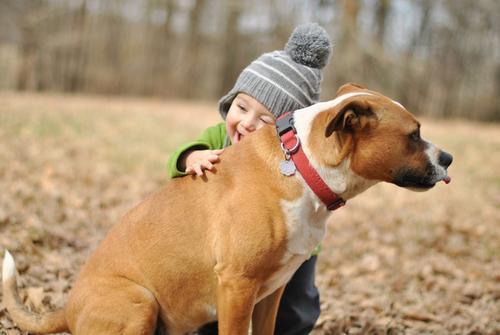 狗狗有些部位不能打!如果你随手一巴掌狗就没了,你还会打吗?