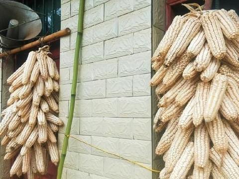 我们经常吃的玉米竟然还有这么多好处!