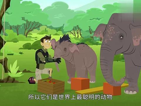 动物兄弟:大象那么聪明,抢了建筑工人的工作!