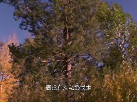 """大树遭""""拦腰斩断"""",人们蹲点了好几天,这才找到了罪魁祸首!"""