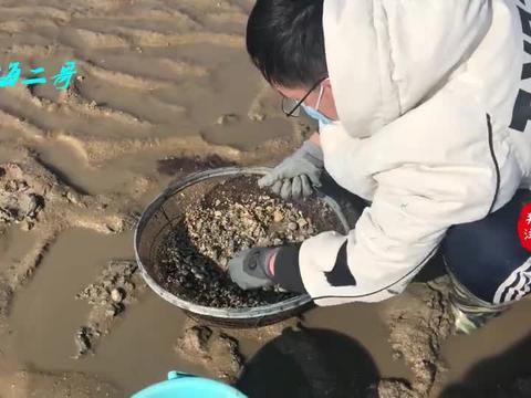 二哥赶海来挖花蛤,带个大网框开干,回家吐完沙子直接辣炒爆香
