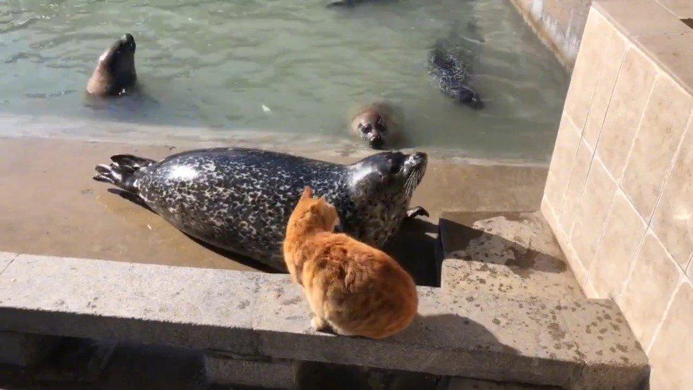 猫咪:哇哇个啥,下去吧!