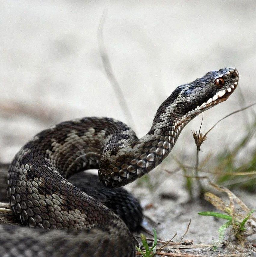 为什么蛇自己不会中蛇毒?这大概是一个物理问题……