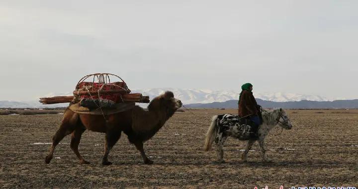 新疆和布克赛尔县:牧民转场的艰辛和马背上的快乐