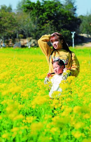 """漫山遍野""""黄金甲"""" 翔安香山50亩油菜花开"""