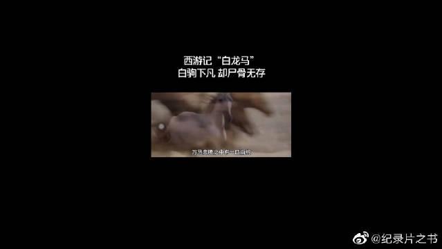 白龙马背后的故事,《西游记》改变白龙马的命运,万物有灵!