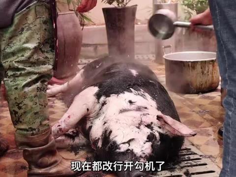 梁师傅在店里杀猪,一头三百多斤的大黑猪分给员工,一个小时搞定
