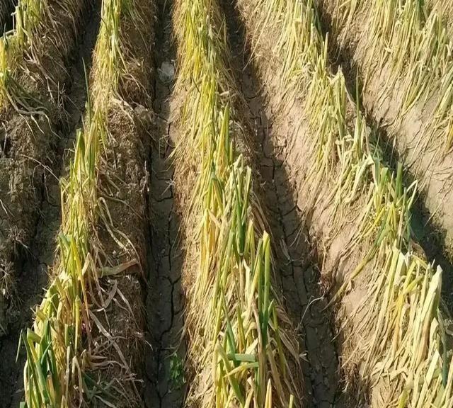 大葱是用来炒菜的商品,而不是用来炒作的纪念品