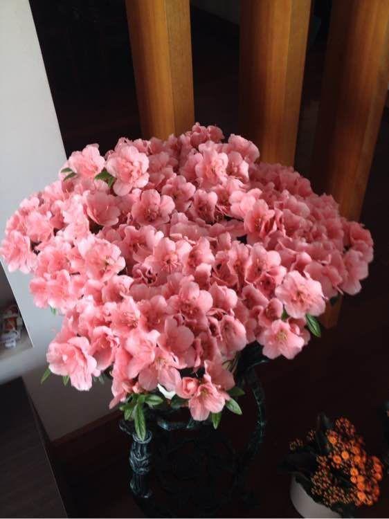 适合夏季养的花,好活易爆盆,枝繁叶茂,叶色翠绿,花色美丽