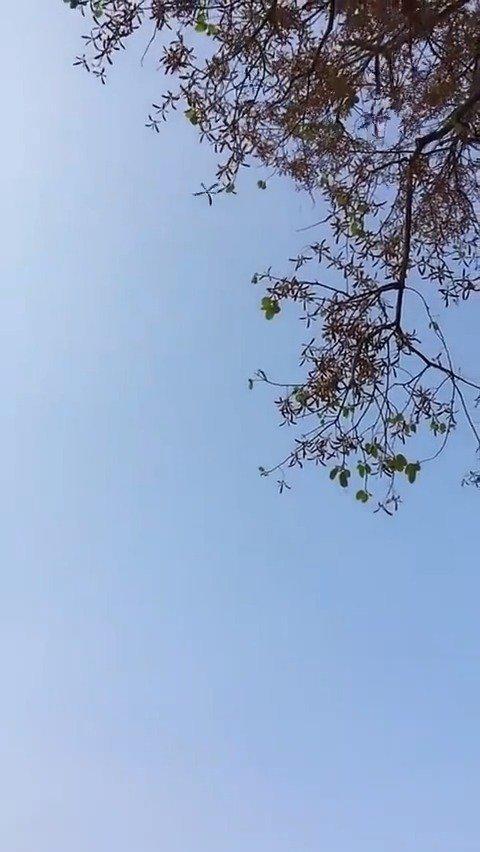 泰国白柳桉,龙脑香科,别名深红梅兰蒂木……