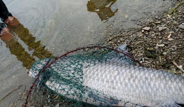冬季钓不到大鱼,不是大鱼在冬眠,而是被这三个误区给误导了