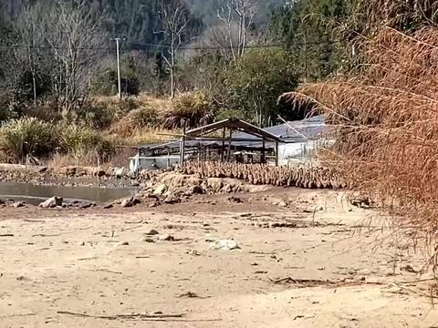 浙江夫妇大山脚下搞养殖,靠4000只鸭子一年收入140万,涨见识了