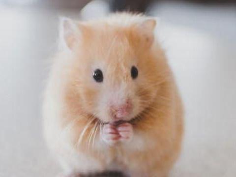 正月鼠一无所获?几月出生的属鼠人命中贵人多相助,事事顺心?