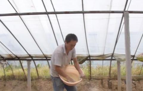 蔬菜施肥时,磷肥使用有讲究,农户注意2点,蔬菜产量高