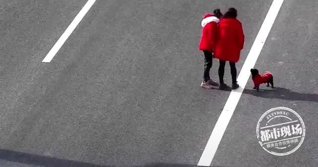 画面让人惊心!红衣女子带着小孩高速上遛狗,还在来回穿梭