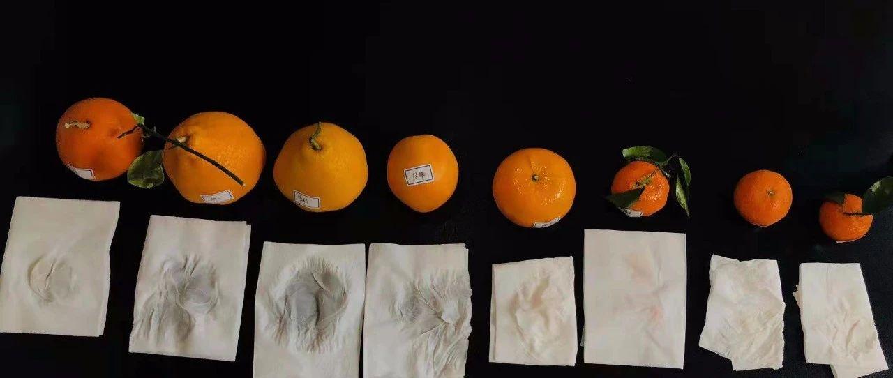 橘子被染色?记者买来8种亲测,果然,事情不简单…