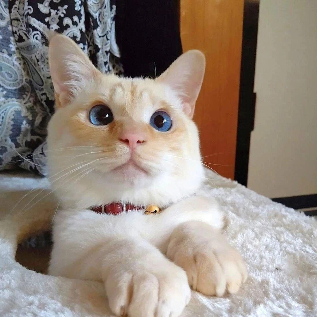 网友分享捡猫经历,画风好像开盲盒