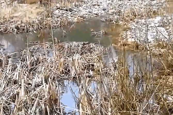 男子野外钓鱼看见河里面撒满了钱币, 细看后拔腿就跑