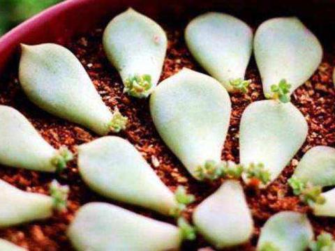 想要扦插养花,试试这3种方法!