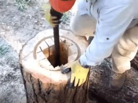 男子将掏空的树桩放在野外半年, 再次取下时里面钻满了蜜蜂