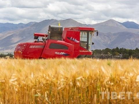 连续6年,西藏农村居民收入全国增速第一