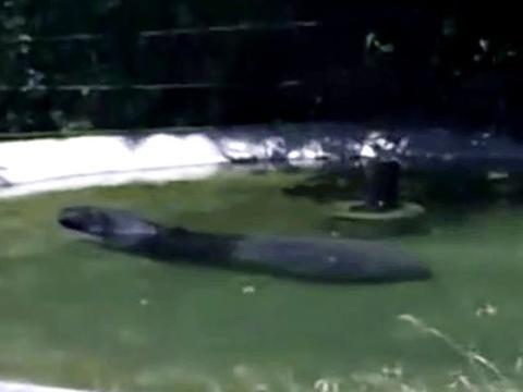 男子野外钓鱼发现水中黑色粗壮物体, 最后决定上交