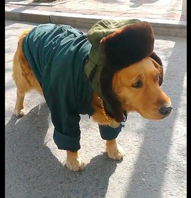 狗狗穿上大衣和帽子,脖子还挂着一根大金链子,这就是狗中土豪吧