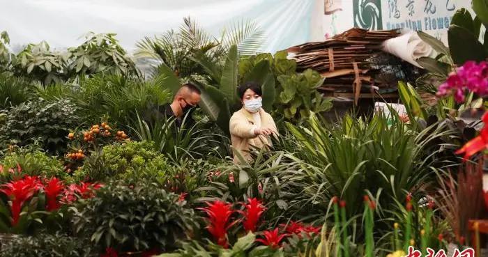 宁夏:年宵花市迎来热销季