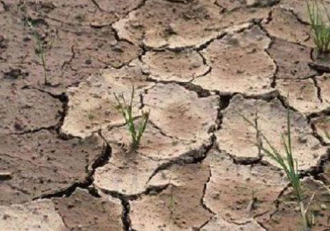 养花土干涸裂缝,别一下子浇透,这么循序渐进才是最佳攻略