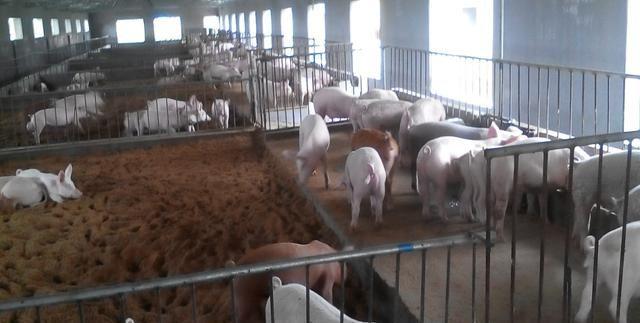 莱西市加速提升畜禽粪污的处理利用水平,促进养殖产业绿色发展