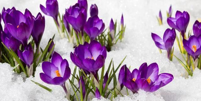 尽日寻春不见春,芒鞋踏遍陇头云,读古诗词,品古人殷殷盼春之情
