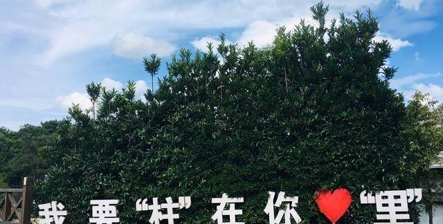福州实景版绿野仙踪,云端避暑胜地!柱子上的风景美如画