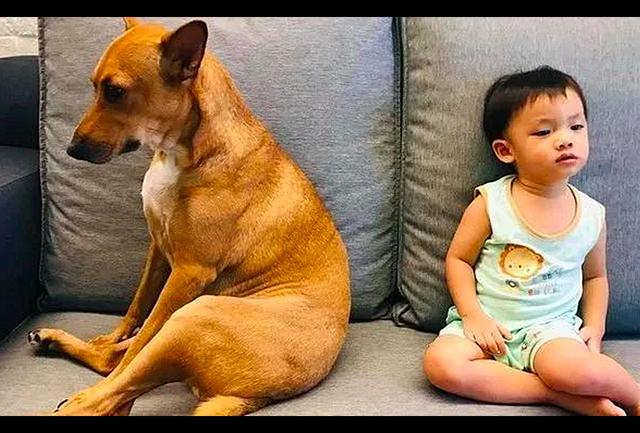 儿子和狗狗生气了,坐在沙发上背对着背谁也不理谁,场面很好笑!
