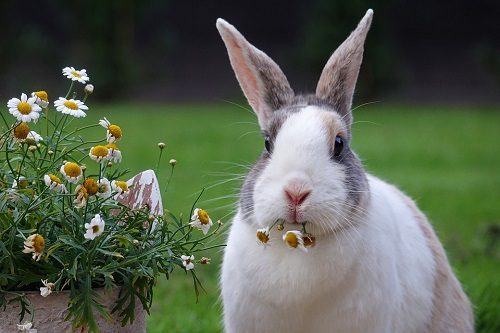分析属兔的人2021年运势