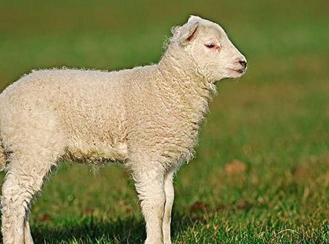 """属羊人,保寿官的""""文曲""""福星来临,2021开始转运!"""
