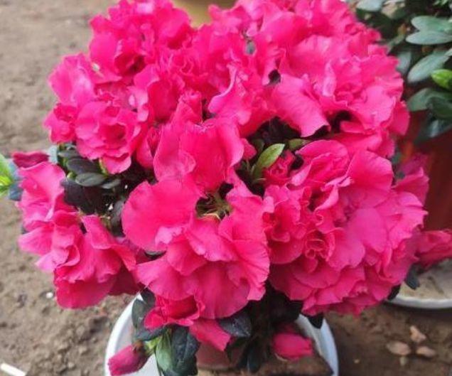 几种漂亮花,花朵多又艳,开花美长势旺