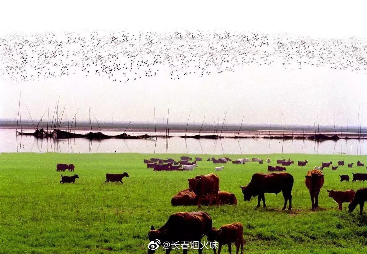 """东洞庭湖 小动物的天堂 东洞庭湖古称""""云梦泽""""……"""