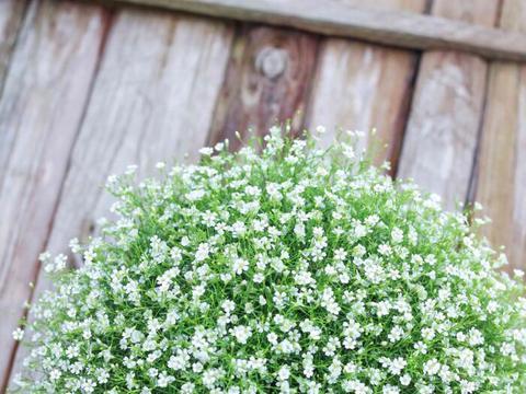 花草湿度不够总掉花蕾,看我的小妙招,轻松解决湿度问题