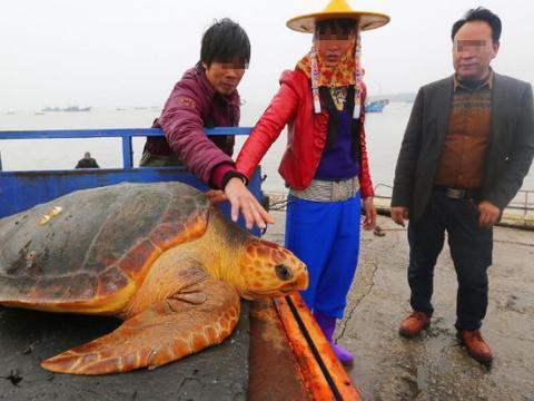 男子海里捕获黄金龟,富豪出50万天价,随后的令他改变主意