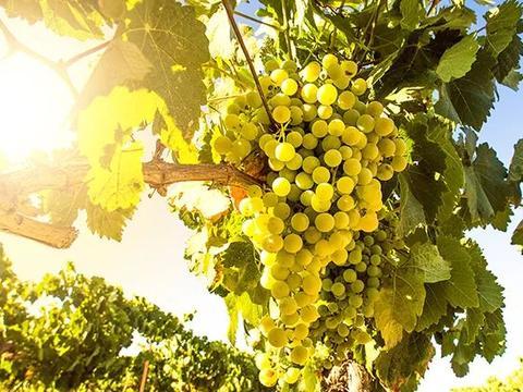 南非2020年葡萄酒出口整体良好,2021再遇禁酒令,又会如何发展?