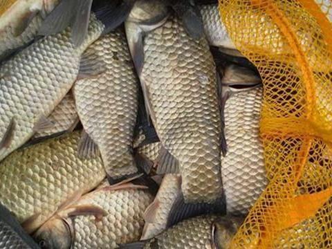 冬季钓鱼,如何钓到大鲫鱼?事实证明,大鲫鱼喜欢在这些位置过冬