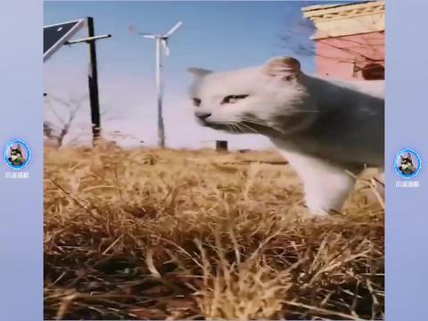 谁会拒绝一只小猫咪呢?